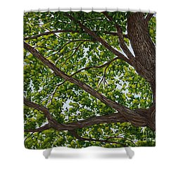 Beneath The Boughs Shower Curtain