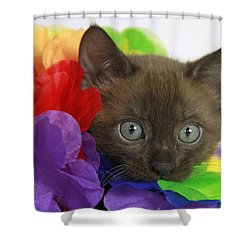 Bengal Colors Shower Curtain