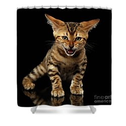 Bengal Kitty Stands And Hissing On Black Shower Curtain by Sergey Taran