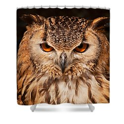 Bengal Owl Shower Curtain