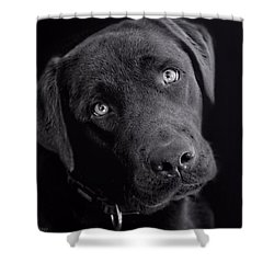 Shower Curtain featuring the photograph Benji In Black And White by Wallaroo Images