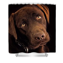 Benji Shower Curtain by Wallaroo Images