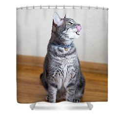 Bennu 17a Shower Curtain