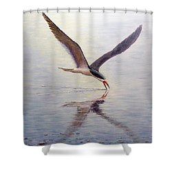 Black Skimmer Shower Curtain by Joe Bergholm