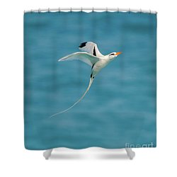 Bermuda Longtail S Curve Shower Curtain