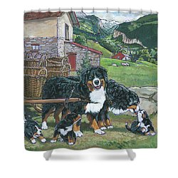Bernese Mountain Dog Shower Curtain by Nadi Spencer