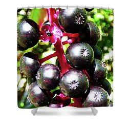 Wild Purple Pokeweed Berries  Shower Curtain