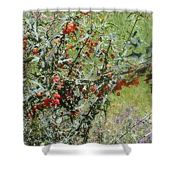 Berries On The Vine Shower Curtain