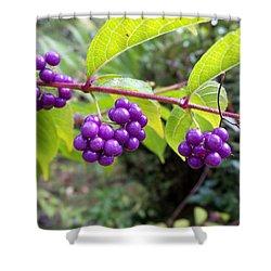 Berries Shower Curtain by Rosie Brown