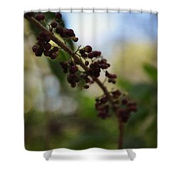 Shower Curtain featuring the photograph Berry Branch by Artists With Autism Inc