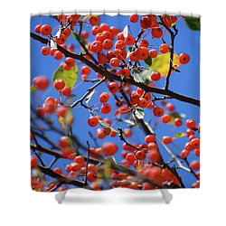 Berry Bunches Shower Curtain