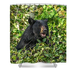 Shower Curtain featuring the photograph Berry Good by Yeates Photography
