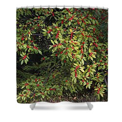 Berry Spread Shower Curtain by Deborah  Crew-Johnson
