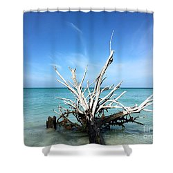 Beside Still Waters Shower Curtain by Margie Amberge