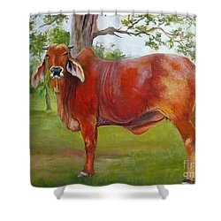 Bessie The Brahama Shower Curtain