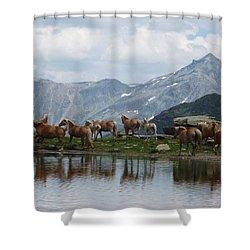 Best Creatures Shower Curtain