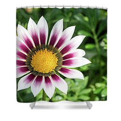 Best Face Forward Shower Curtain