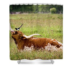 Best Friends - Texas Longhorn Magpie Shower Curtain by TL Mair