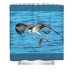 Best Osprey With Fish In One Talon Shower Curtain
