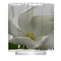 Bettyann Shower Curtain by Priscilla Richardson