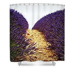 Between The Purple Shower Curtain