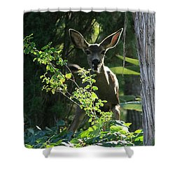 Beverly Hills Deer Shower Curtain by Marna Edwards Flavell