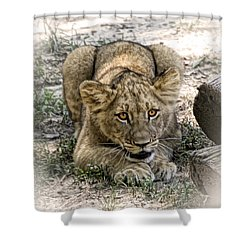 Shower Curtain featuring the photograph Beware by Cheri McEachin