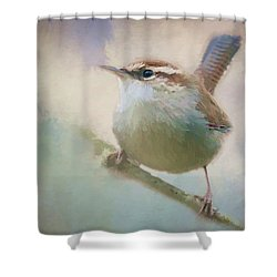 Bewicks Wren - 365-131 Shower Curtain