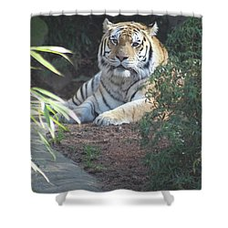 Shower Curtain featuring the photograph Beyond The Branches by Laddie Halupa
