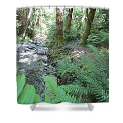 Shower Curtain featuring the photograph Beyond The Ferns by Marie Neder
