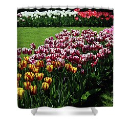 Multicolor Tulips Shower Curtain