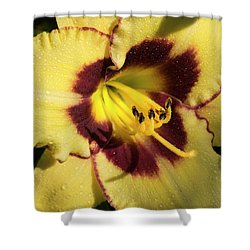 Bicolored Lily Shower Curtain by Jean Noren