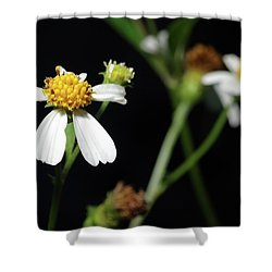 Shower Curtain featuring the photograph Bidens Alba by Richard Rizzo