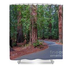 Big Basin Redwoods Shower Curtain