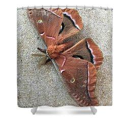 Big Beautiful Silk Moth Shower Curtain