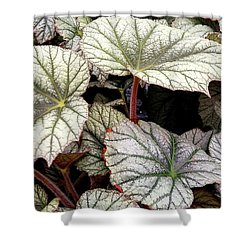 Big Begonia Leaves Shower Curtain