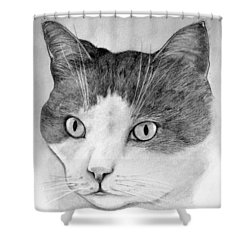 Shower Curtain featuring the drawing Big Boy Baily by John Stuart Webbstock