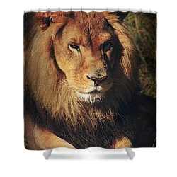Big Boy Shower Curtain by Laurie Search