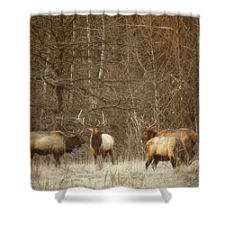 Shower Curtain featuring the photograph Big Bull Meeting In Boxley Valley by Michael Dougherty