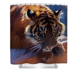 Big Cat In Chalk Shower Curtain