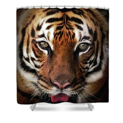 Big Cat Stare Down Shower Curtain