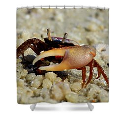 Big Claw Shower Curtain by Sean Allen