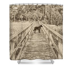 Shower Curtain featuring the photograph Big Dog by Margaret Palmer