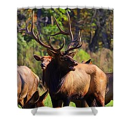 Big Elk Shower Curtain