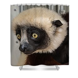 A Very Curious Sifaka Shower Curtain