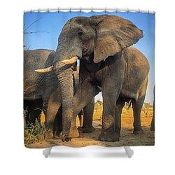 Big Guy Shower Curtain