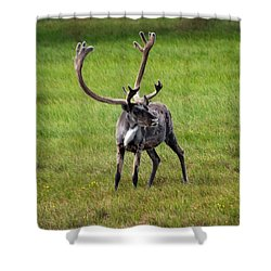Big Horn Shower Curtain by Anthony Jones
