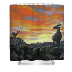 Big Horn Sheep At Sunset Shower Curtain
