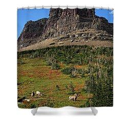 Big Horn Sheep Shower Curtain