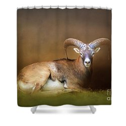 Big Horn Sheep Shower Curtain by Marion Johnson